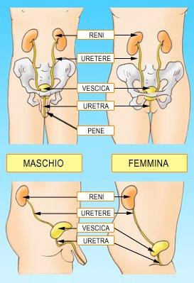 infiammazione vescica donne