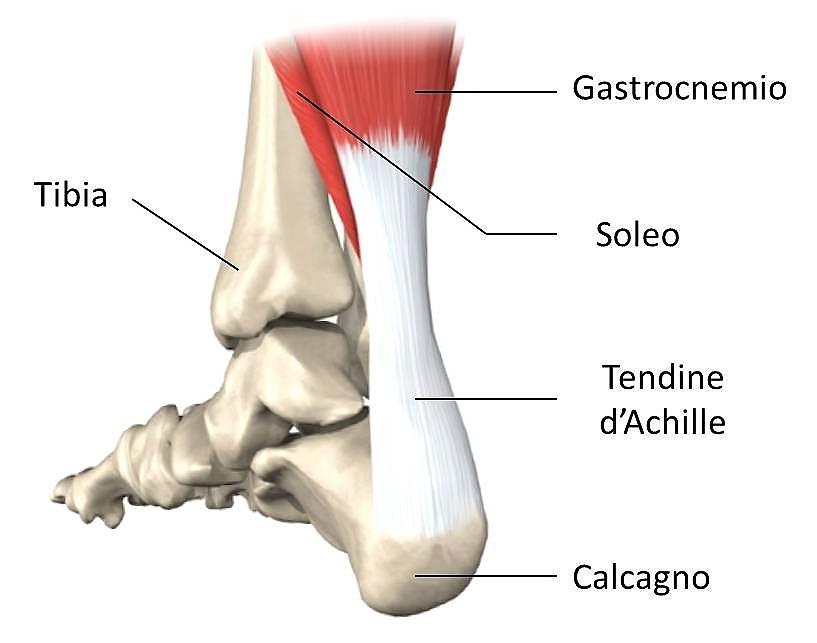 Il tendine di Achille